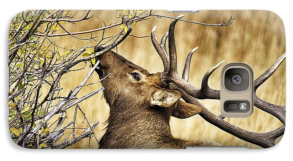 Galaxy Case featuring the photograph Elk Portrait by Catherine Fenner