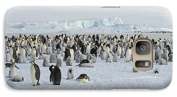 Emperor Penguins Aptenodytes Forsteri Galaxy S7 Case