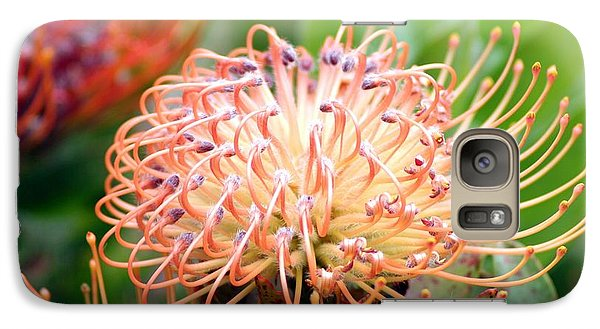Galaxy Case featuring the photograph Encompassing Proteas by Mary Lou Chmura