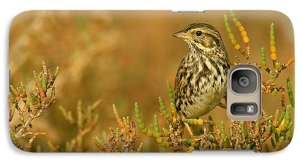 Galaxy Case featuring the photograph Endangered Beldings Savannah Sparrow - Huntington Beach California by Ram Vasudev