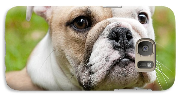 English Bulldog Puppy Galaxy S7 Case