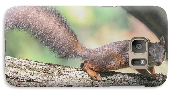 Galaxy Case featuring the photograph Euroasian Red Squirrel - Sciurus Vulgaris by Jivko Nakev