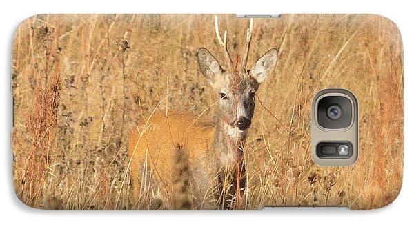 Galaxy Case featuring the photograph European Roe Deer by Jivko Nakev
