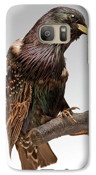 European Starling Galaxy S7 Case by Ucl, Grant Museum Of Zoology