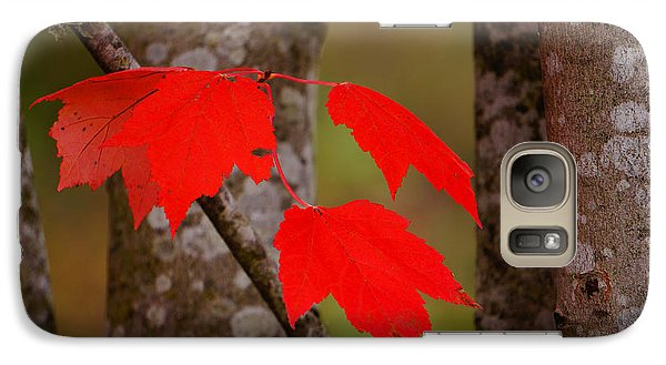 Galaxy Case featuring the photograph Fall Aflame by Ronda Broatch