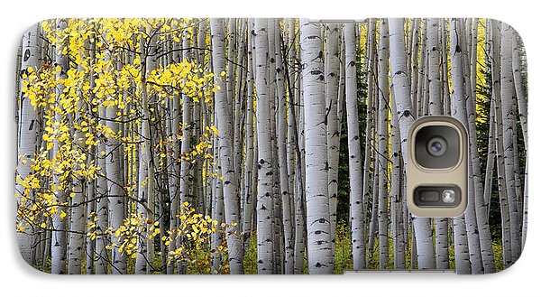 Galaxy Case featuring the photograph Fall Forest by The Forests Edge Photography - Diane Sandoval