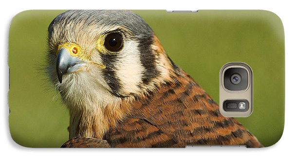 Galaxy Case featuring the photograph female American Kestrel by Doug Herr