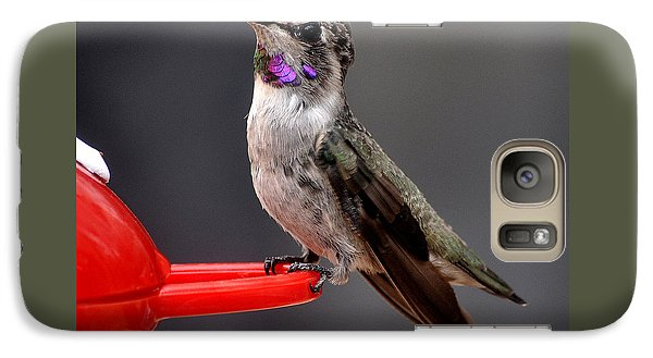 Galaxy Case featuring the photograph Female Anna's Hummingbird On Perch Posing For Her Supper by Jay Milo