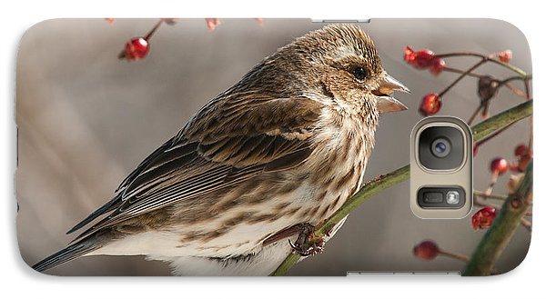 Galaxy Case featuring the photograph Female Purple Finch On Berries by Lara Ellis
