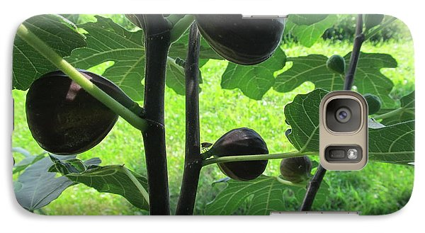 Galaxy Case featuring the photograph Fig Leaves And Fruits by Tina M Wenger