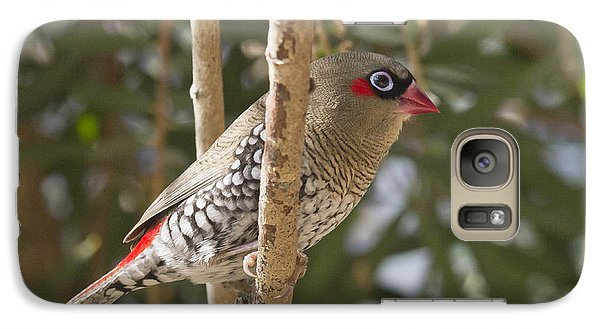 Galaxy Case featuring the photograph Finch by Serene Maisey