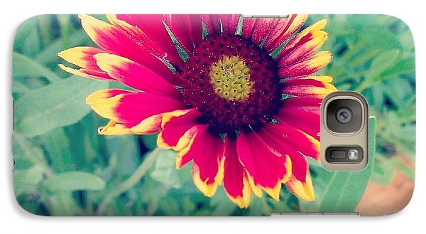 Galaxy Case featuring the photograph Fire Daisy by Thomasina Durkay