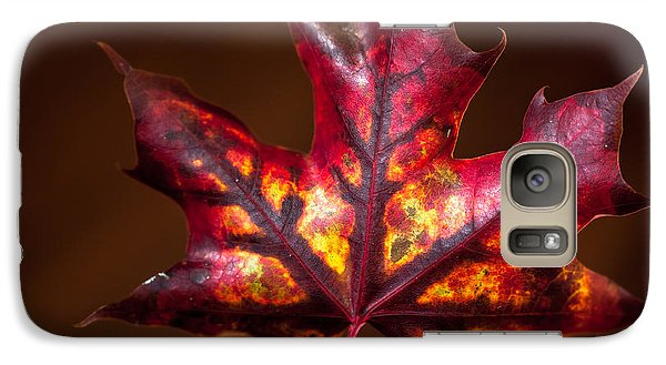 Galaxy Case featuring the photograph Flaming Red  by Crystal Hoeveler