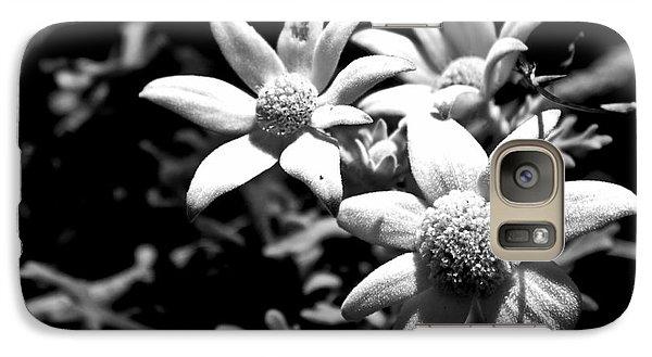 Galaxy S7 Case featuring the photograph Flannel Flower by Miroslava Jurcik