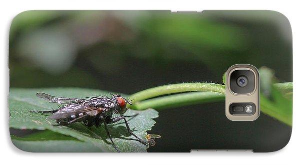Galaxy Case featuring the photograph Flesh Fly - Sacrophaga Variegata by Jivko Nakev