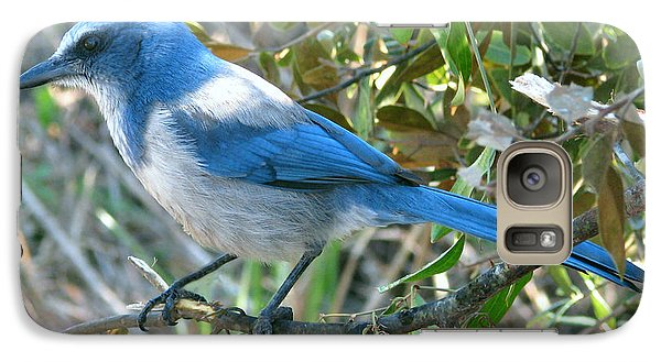 Galaxy Case featuring the photograph Florida Scrub Jay by Peg Urban
