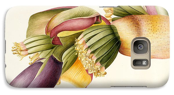 Flower Of The Banana Tree  Galaxy S7 Case by Georg Dionysius Ehret
