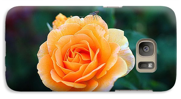 Galaxy Case featuring the photograph Fly On A Rose by Kevin Ashley