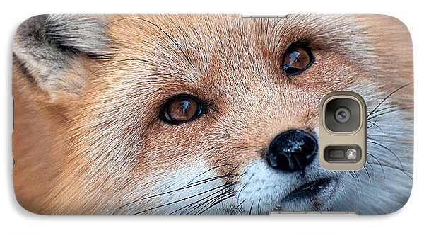 Galaxy Case featuring the photograph Foxy Lady by Bianca Nadeau