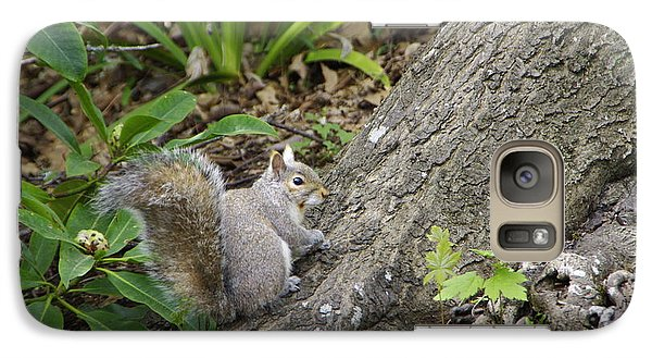 Galaxy Case featuring the photograph Friendly Squirrel by Marilyn Wilson