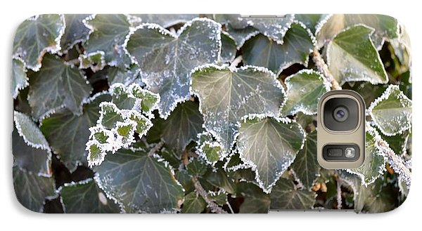 Galaxy Case featuring the painting Frozen Hedera Helix 2 by Felicia Tica