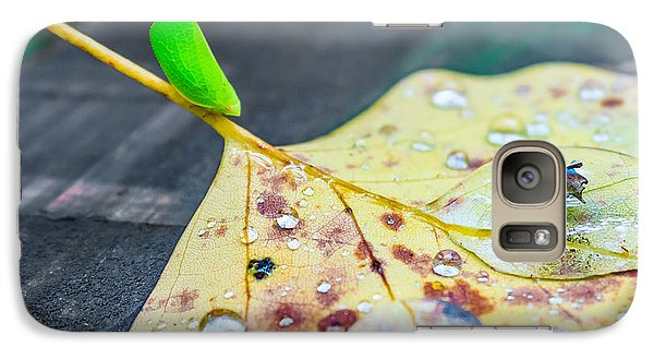 Galaxy Case featuring the photograph Fulgoroidea On A Leaf by Rob Sellers