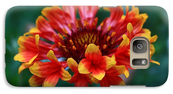 Galaxy Case featuring the photograph Gaillardia Flower by Keith Hawley