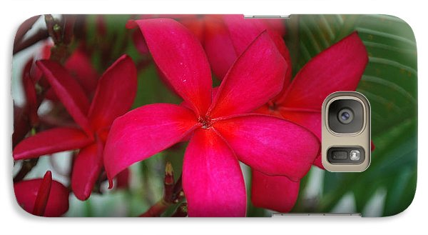 Galaxy Case featuring the photograph Garden Treasures by Miguel Winterpacht