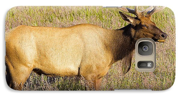 Galaxy Case featuring the photograph Gazing Elk by Todd Kreuter