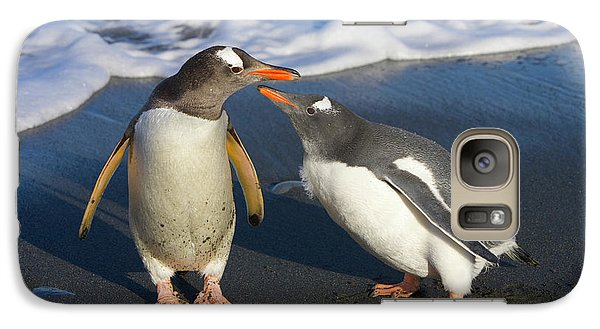 Gentoo Penguin Chick Begging For Food Galaxy S7 Case by Yva Momatiuk and John Eastcott
