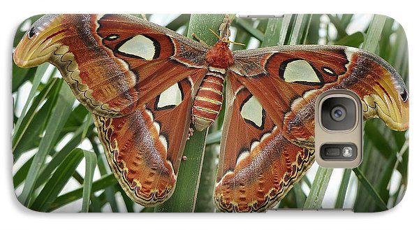 Galaxy Case featuring the photograph Giant Atlas Moth by Cindy McDaniel