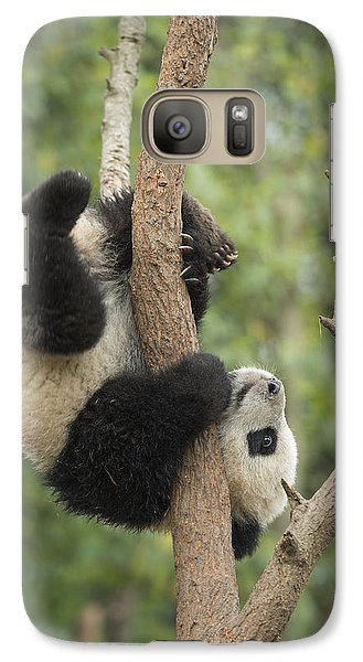 Giant Panda Cub In Tree Chengdu Sichuan Galaxy Case by Katherine Feng