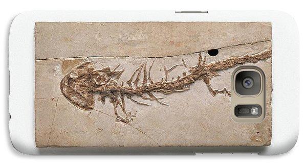 Salamanders Galaxy S7 Case - Giant Salamander Fossil by Dorling Kindersley/uig