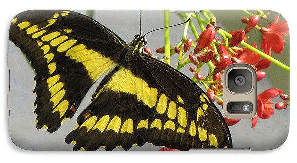 Galaxy Case featuring the photograph Giant Swallowtail by Jennifer Wheatley Wolf
