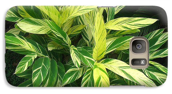Galaxy Case featuring the photograph Ginger Lily. Alpinia Zerumbet by Connie Fox