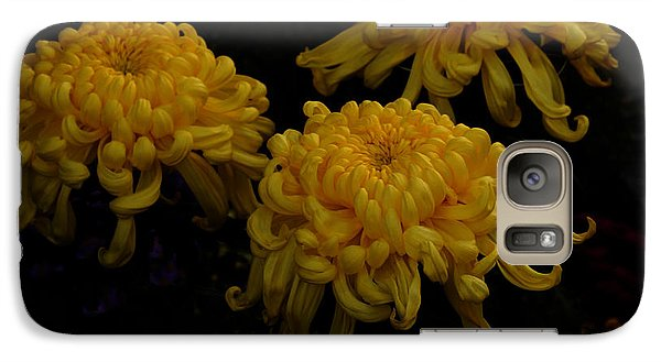 Galaxy Case featuring the photograph Golden Crysanthemums by Cassandra Buckley