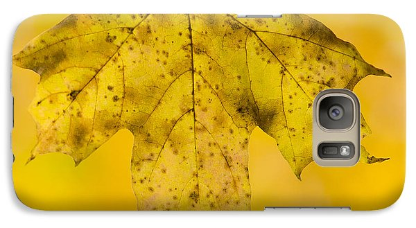 Galaxy Case featuring the photograph Golden Maple Leaf by Sebastian Musial