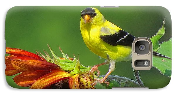 Galaxy Case featuring the photograph Goldfinch Pose by Dianne Cowen