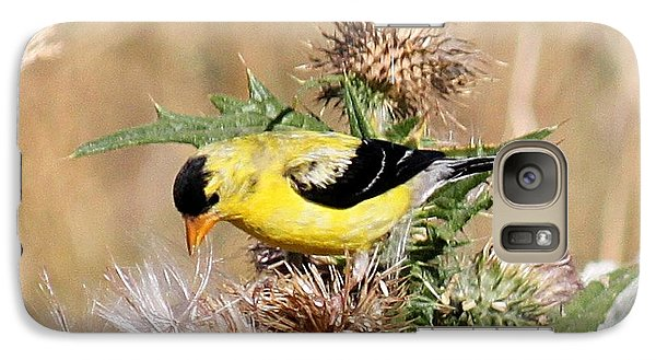 Galaxy Case featuring the photograph Goldfinch Quest 3 by Erica Hanel