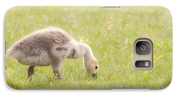 Galaxy Case featuring the photograph Gosling by Jeannette Hunt