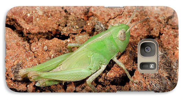 Grasshopper Aiolopus Strepens Nymph Galaxy S7 Case by Nigel Downer