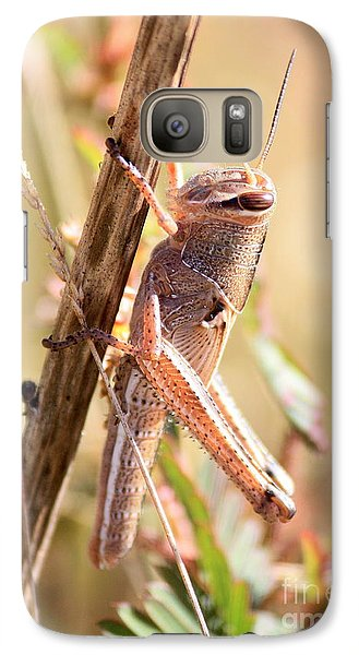 Grasshopper In The Marsh Galaxy S7 Case