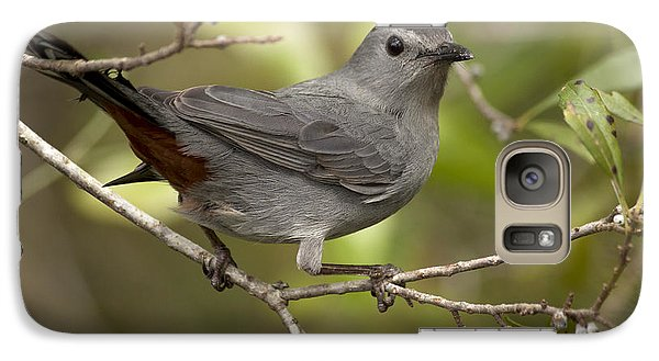 Galaxy Case featuring the photograph Gray Catbird by Meg Rousher