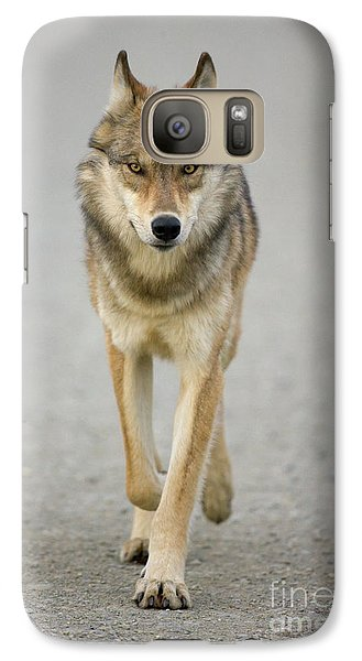 Gray Wolf Denali National Park Alaska Galaxy S7 Case