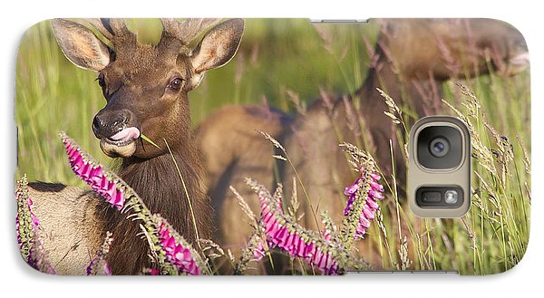 Galaxy Case featuring the photograph Grazing At Dusk by Todd Kreuter