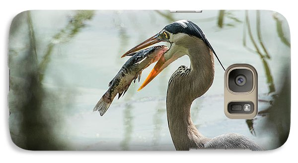 Great Blue Heron With Fish In Mouth Galaxy S7 Case by Sheila Haddad