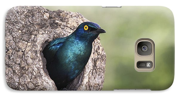 Greater Blue-eared Glossy-starling Galaxy Case by Andrew Schoeman