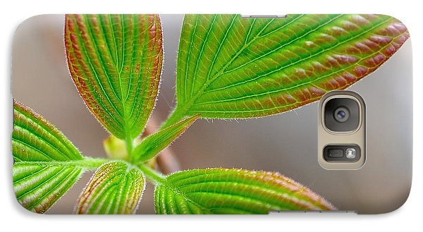 Galaxy Case featuring the photograph Green And Red Leaves by Todd Soderstrom