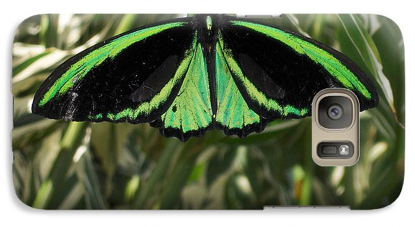 Galaxy Case featuring the photograph Green Butterfly by Brenda Brown