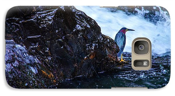 Galaxy Case featuring the photograph Green Heron Blue During Mating by Lori Miller